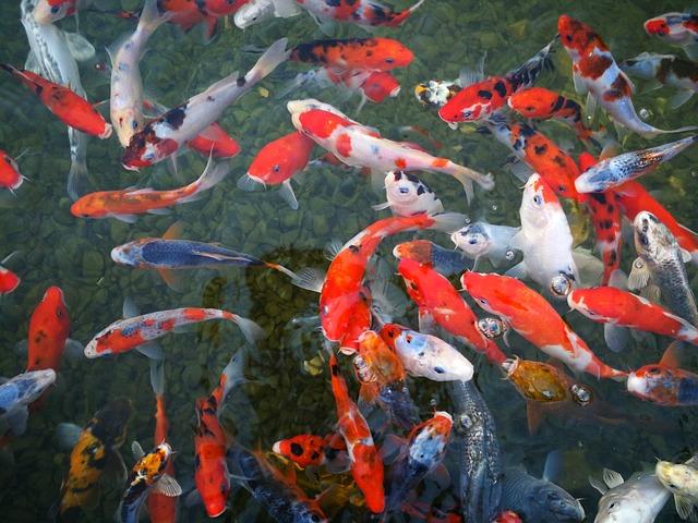 отглеждане на декоративни рибки